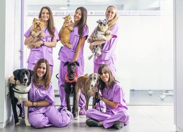 curso-de-auxiliar-tecnico-veterinario