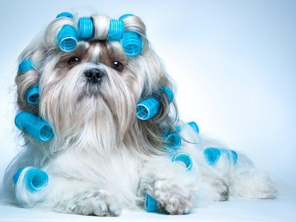 Peluquería comercial canina