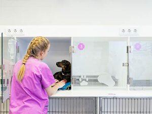 Cursos para auxiliares veterinarios. Hospitalización
