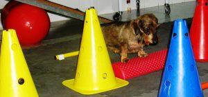 Rehabilitación en pequeños animales (Aux.) @ Forvet / Hospital Veterinario VETSIA