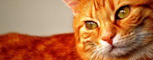Mundo felino: comportamiento, educación y manejo del gato @ Forvet