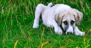 Cuidados y primeros auxilios en el perro y el gato @ Forvet