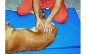 Rehabilitación en pequeños animales (Vet.) @ Hospital Veterinario VETSIA | Leganés | Comunidad de Madrid | España