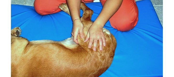 Rehabilitación en pequeños animales (Vet.)