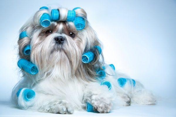 Curso de Peluquería Comercial Canina en Madrid