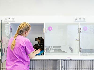 Cursos para auxiliares veterinarios