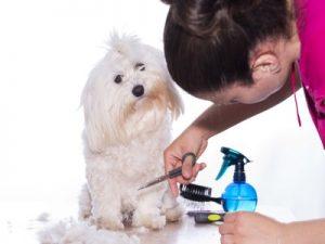 Curso Peluquería Comercial Canina