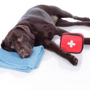 Curso cuidados y primeros auxilios. Perro enfermo