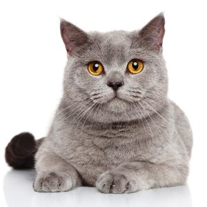 Curso mundo felino / etología felina