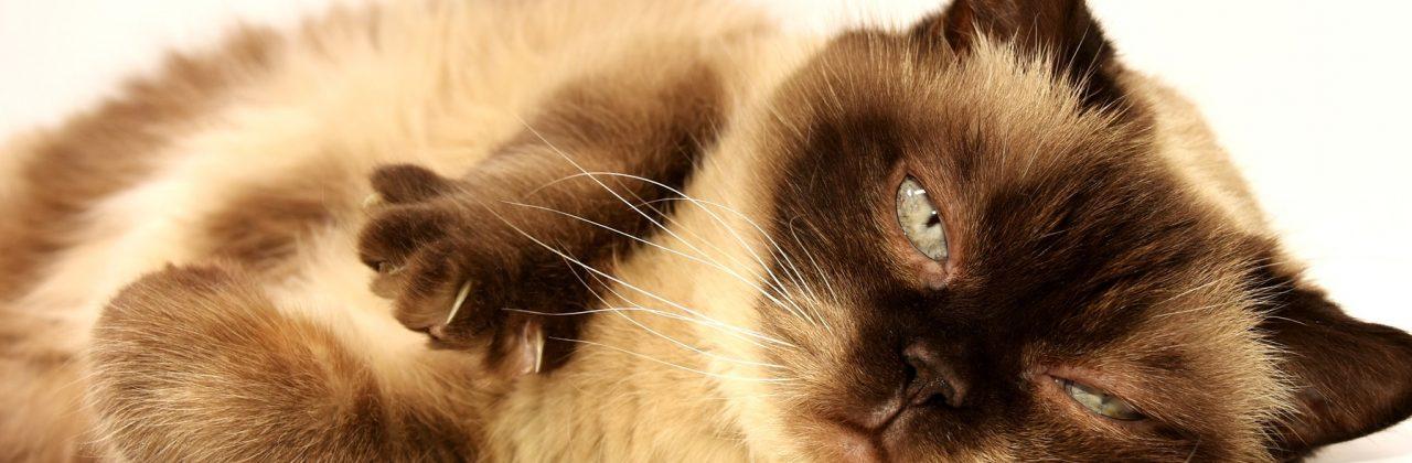 El paciente felino: visión 360º