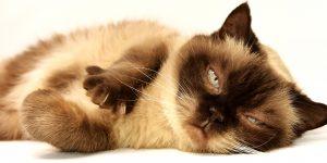 El paciente felino: visión 360º @ Forvet - Centro de Formación Veterinaria