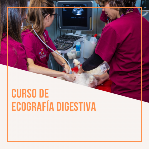 Ecografía digestiva en pequeños animales. Edición noviembre 2021 @ Hospital Veterinario VETSIA